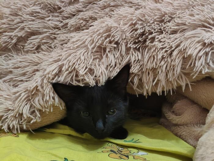 Заберите котейку Кот, Котята, Черный кот, Отдам, Николаев, Длиннопост