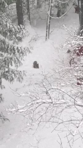 Малыши лисята и их первый снег