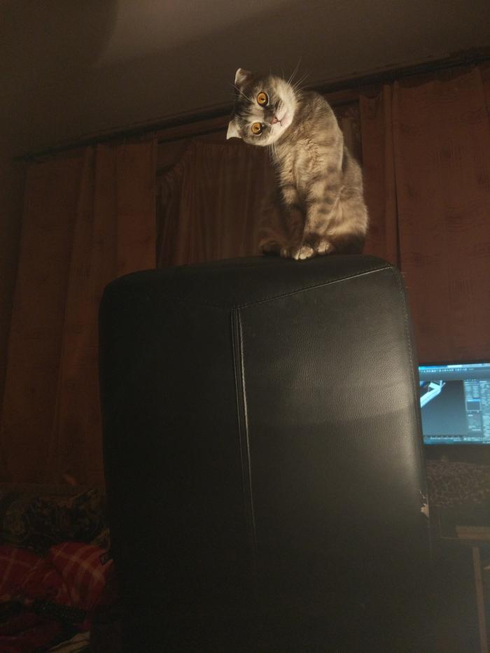 Котя Кот, Лампа