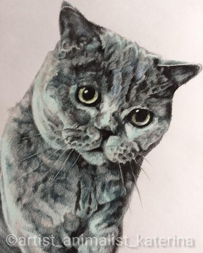 Портреты котиков(цветные карандаши). Часть 3. Кот, Портрет, Цветные карандаши, Рисунок, Длиннопост