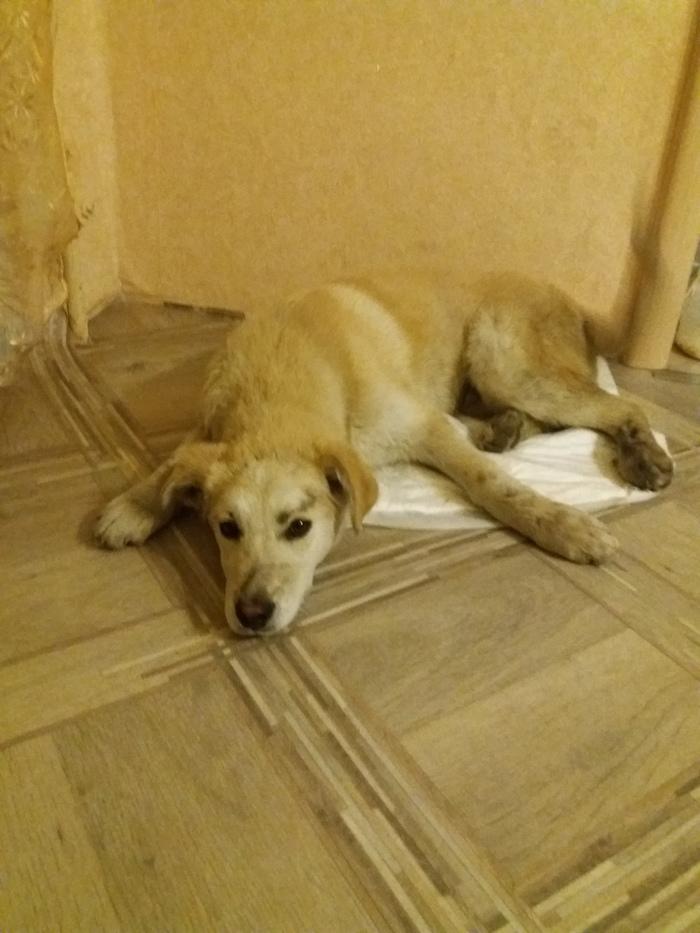 Спасти агента Пёсеньку Собака, Живодеры, Спасение животных