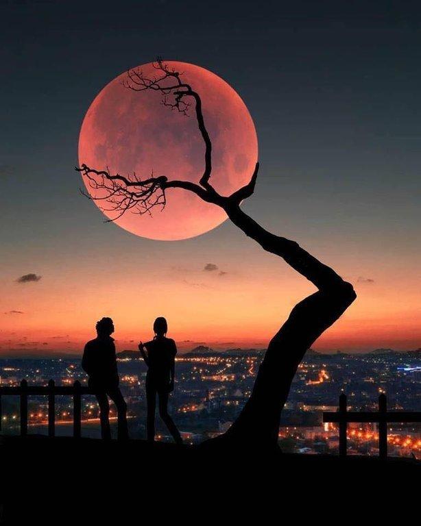 Лунное дерево