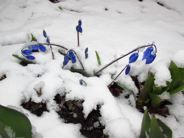 Демисезонное Цветы, Снегопад, Апрель, Подмосковье