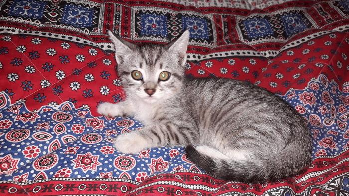 Спасти котенка - несложно. Котята, Помощь, Кот, Помощь животным, Спасение животных