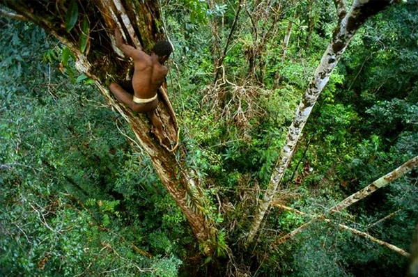 Короваи: первобытное племя каннибалов, живущее на деревьях Короваи, Караваи, Первобытные племена, Папуа-Новая Гвинея, Традиции, Обычаи, Экватор, Длиннопост, Яндекс Дзен