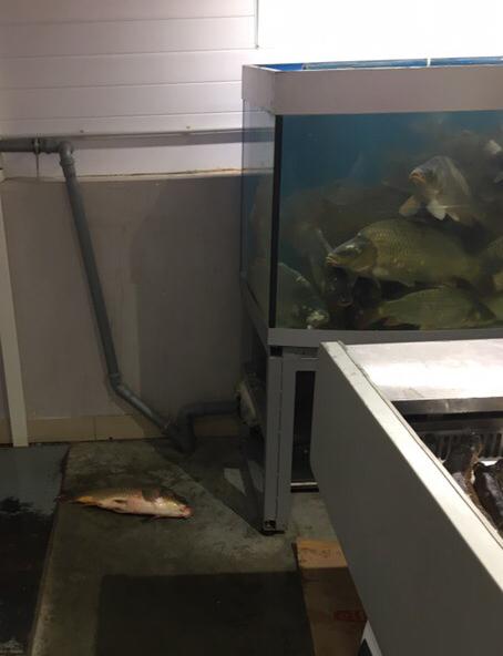 Рыбы не рабы Карп, Аквариум, Рыба, Рынок