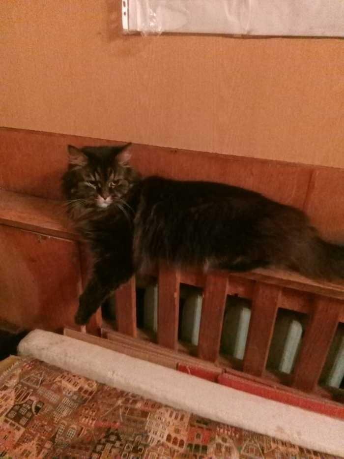 Пропал кот. Просим помощи. Потерялся кот, Без рейтинга, Помогите найти, Кот, Помощь, Поиск животных
