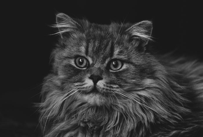 Кота вам в ленту) Кот, Хочу критики, Начинающий фотограф, Nikon