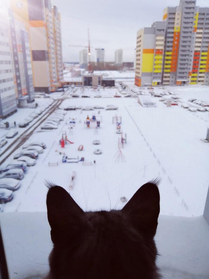 Снежное утро весны Снег, Весна, Утро, Кот, Барнаул