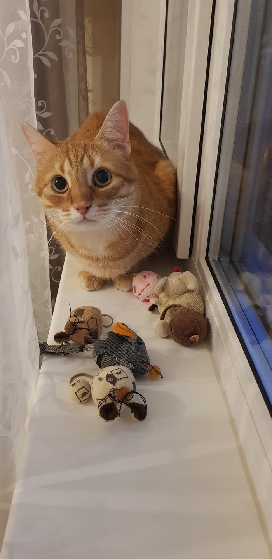 Мышиный король Кот, Котомафия, Кошки-Мышки, Рыжий