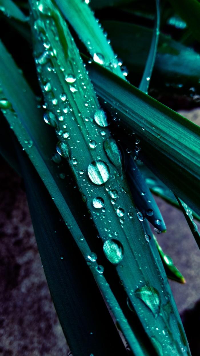 Фотопроба Фотография, Природа, Листья, Капли, Макросъемка, Начинающий фотограф