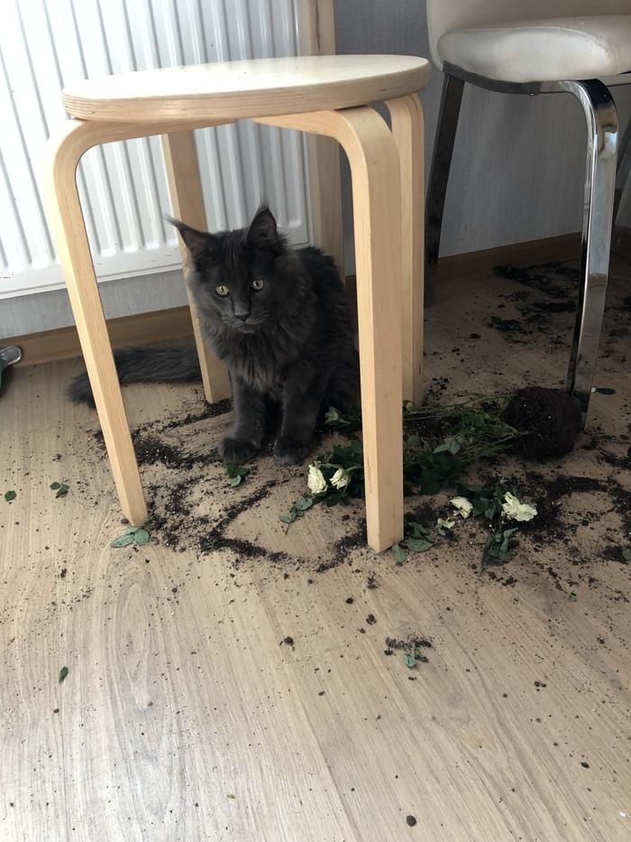 Когда понял что натворил недоброго... Кот, Цветы, Погром