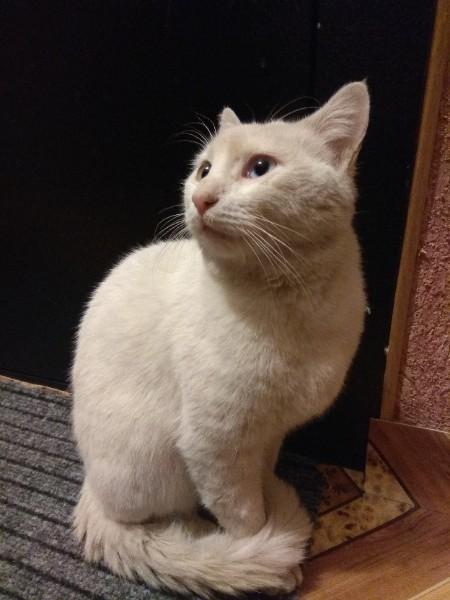 Помогите найти кошке дом. Белгород Без рейтинга, Кот, Белгород