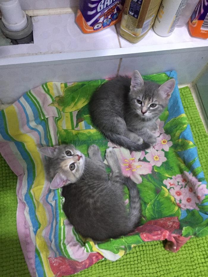 Помогите пристроить котят Котята, Подкидыш, В добрые руки, Оренбург, Помощь, Длиннопост, Без рейтинга, Кот, Отдам
