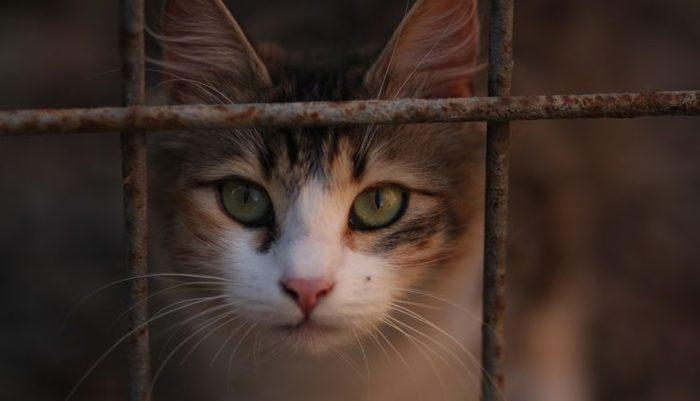 В селе под Новосибирском, численностью менее 200 человек, запретили продавать кошек Бешенство, Новосибирская область, Кот, Заболевания, Эпидемия