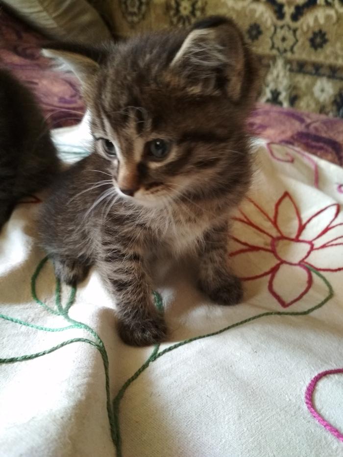 Бесплатные котаны Котята, В добрые руки, Без рейтинга, Кот, Ангарск, Иркутск, Длиннопост