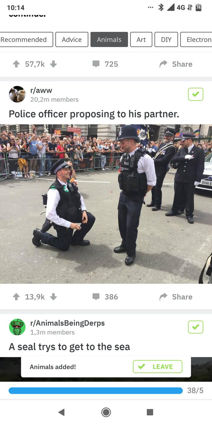 Кто знает, объясните Полиция, Reddit, Помощь, Толерантность