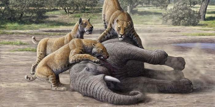 Первая война человечества: как древние люди истребили диких животных Длиннопост, История, Наука, Человечество, Первобытные люди, Вымирание
