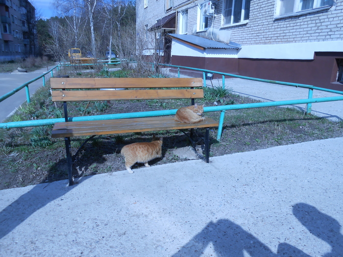 Котики во дворе у знакомого - классные))
