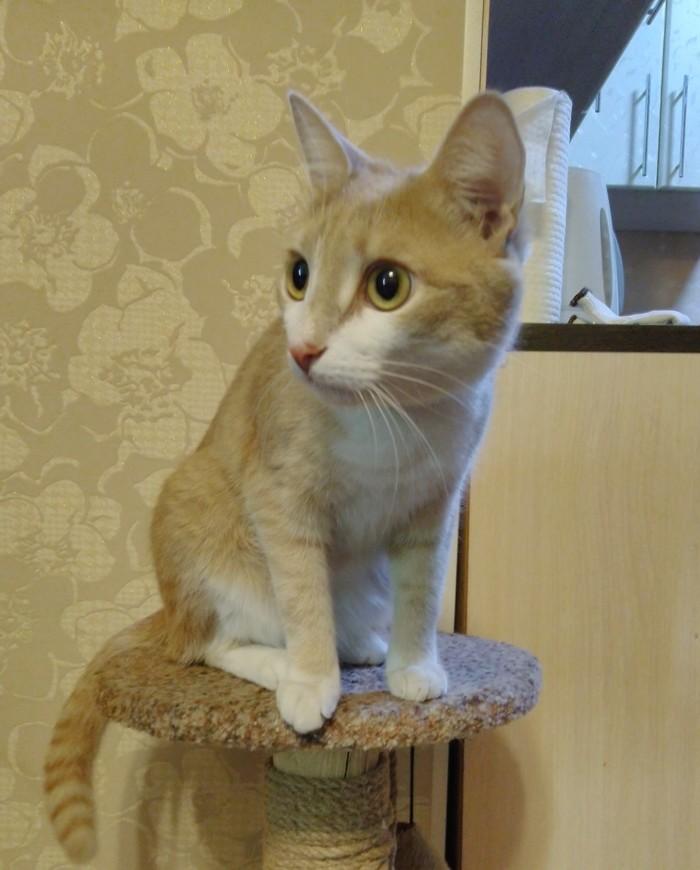 (С)кот: Кот, Котомафия, Длиннопост