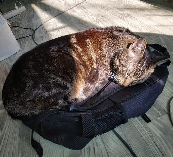Котей очень любит рюкзак Котомафия, Кот, Рюкзак