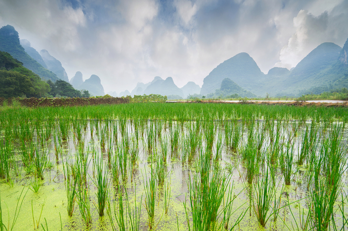 Welcome to the rice fields