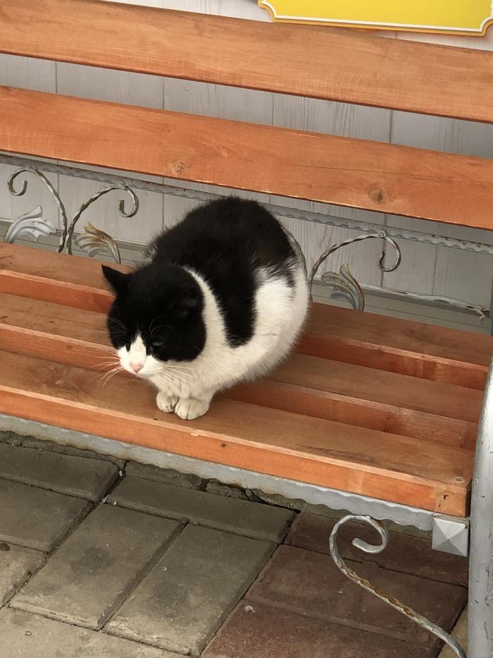 Котик, просто котик
