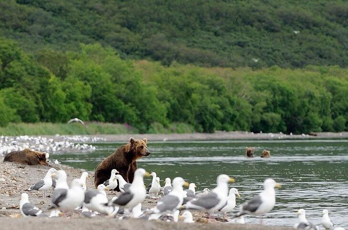 Медвежий курорт