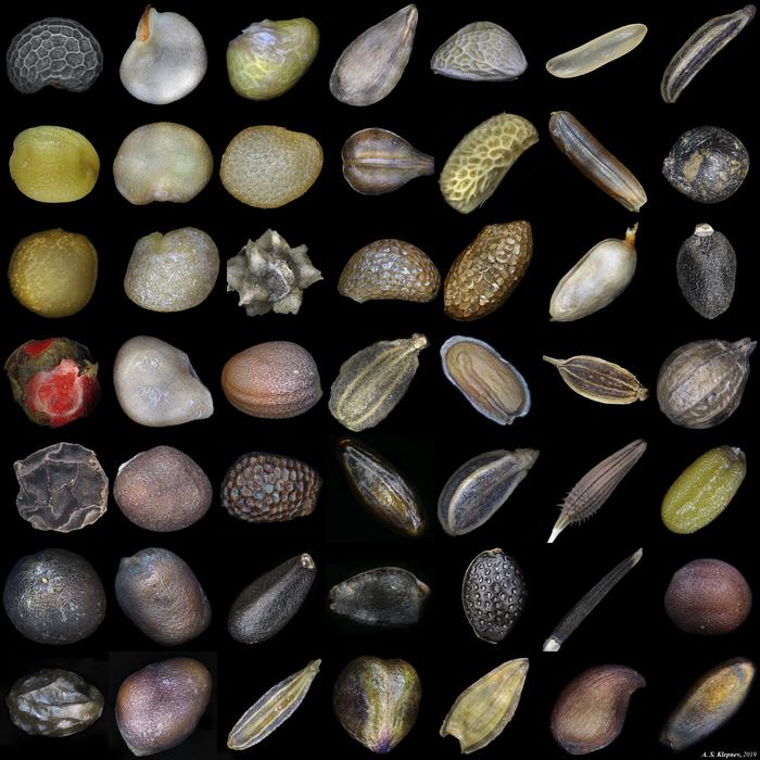 Семена. Микроскоп, Семена