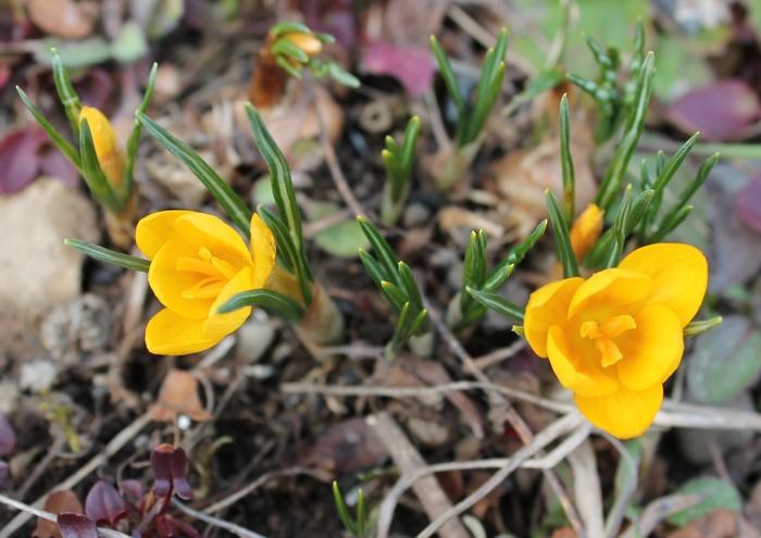 Дарю солнечное настроение Фотография, Цветы, Canon, Весна, Природа