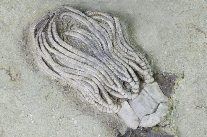 Находка Палеонтология, Хищник, Находка