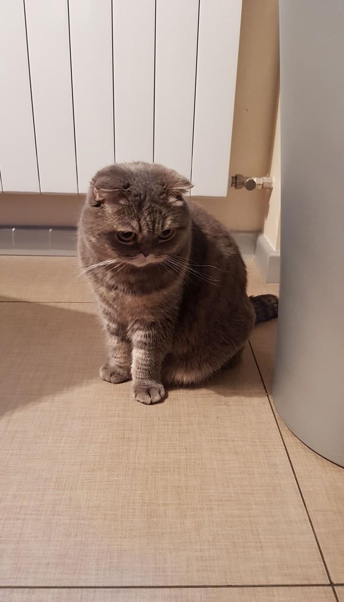 Когда ты всё равно ни в чём не виновата Кот, Не виноват