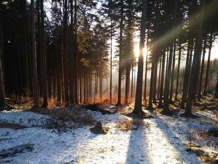 Раз уж пошла волна Фотография, Природа, Красивое, Лес, Солнце