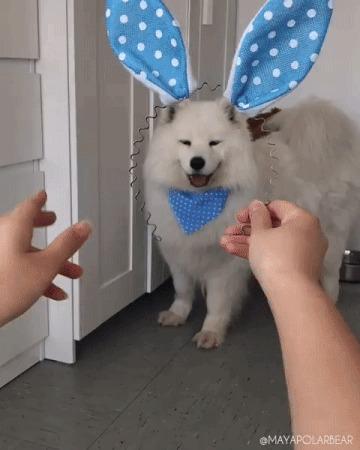 Кролика вам в ленту