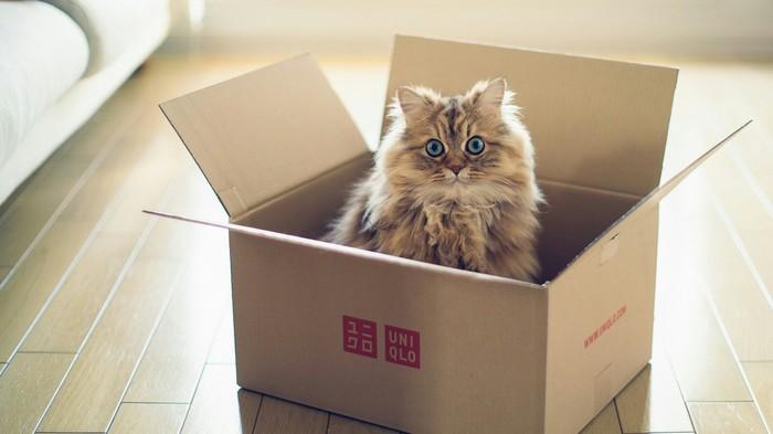 Кошки самый древний вид на земле Кот, Египет, Космос, Животные, Длиннопост