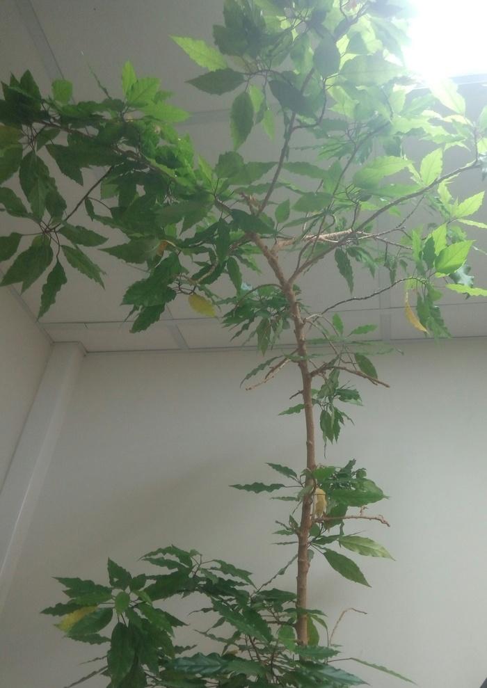 Название растения Комнатные растения, Название растения, Длиннопост