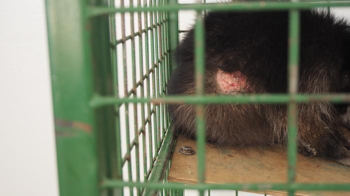 В городе Бобруйске происходит издевательство над животными Зоопарк, Бобруйск, Беларусь, Енот, Длиннопост, Без рейтинга, Животные, Помощь животным, Негатив