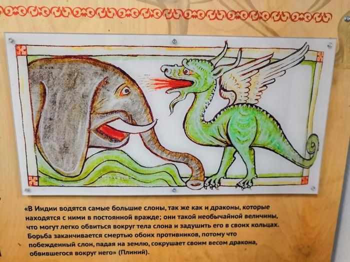 Серсея явно в теме! Слоны, Дракон, Игра престолов, Серсея Ланнистер, Московский зоопарк, Длиннопост