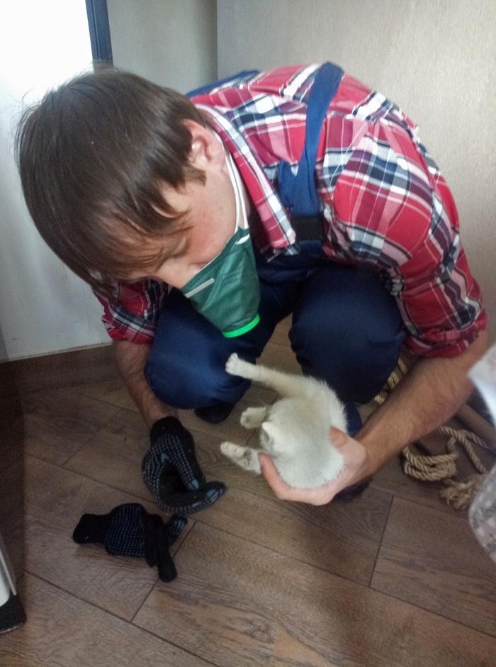 Голубоглазый блондин в черной вентшахте Кот, Кошкиспас, Спасение животных, Кот белый, Длиннопост