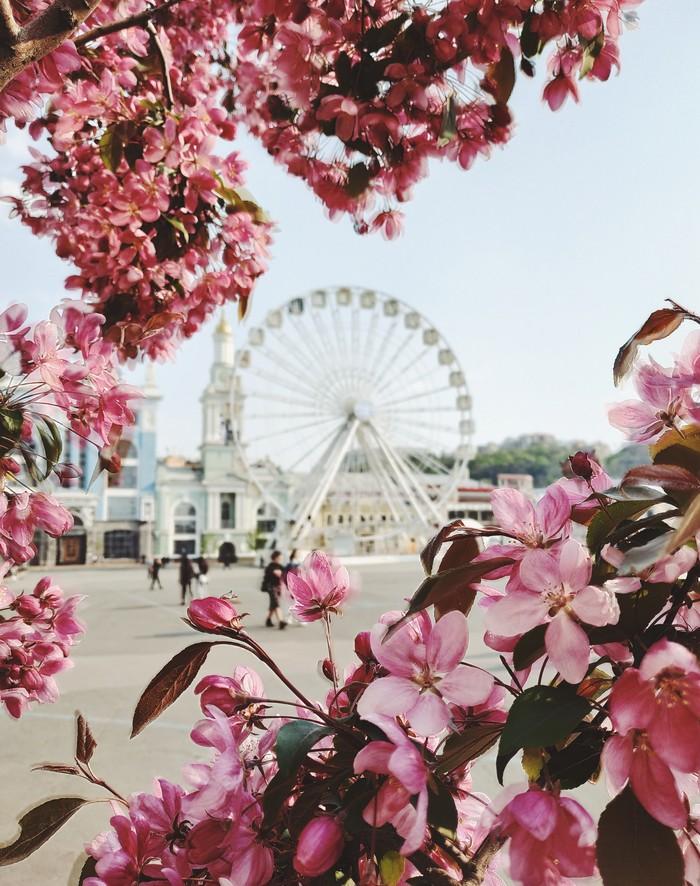 Весна на площади Мобильная фотография, Начинающий фотограф, Весна, Цветы