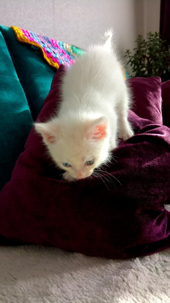 Забавный мальчуган - котейка в добрые руки (Иркутск) Длиннопост, Кот, В добрые руки, Иркутск, Без рейтинга