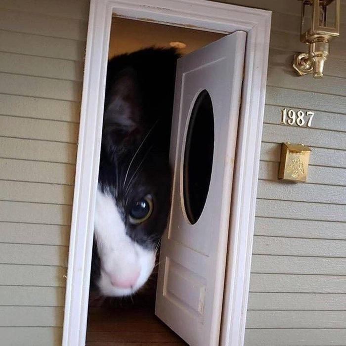 Не могли бы вы перестать звонить в дверь, пожалуйста?