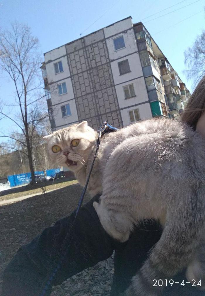 Решили погулять с кошкой которая никогда не выходила из дома