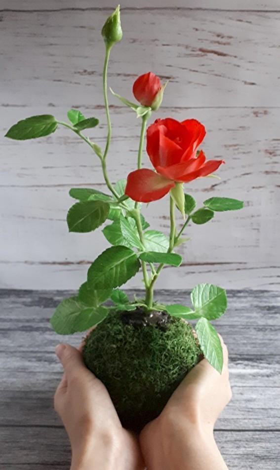 Кокедама с розой.Холодный фарфор. Кокедама, Бонсай, Роза, Цветы, Рукоделие без процесса, Холодный фарфор, Полимерная глина, Длиннопост