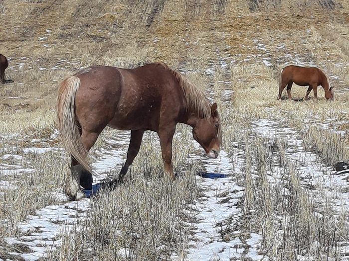 ЗАДАЧА: Беговая дорожка для лошади. Лошади, Беговая дорожка, Лига Инженеров, Нужен совет, Своими руками