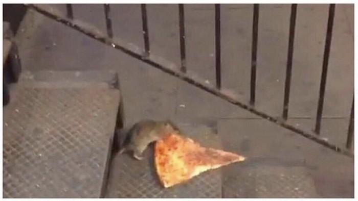 Ты видишь крысу, а я вот вижу тяжело трудящегося отца-одиночку, который пытается прокормить своих детей черепашек