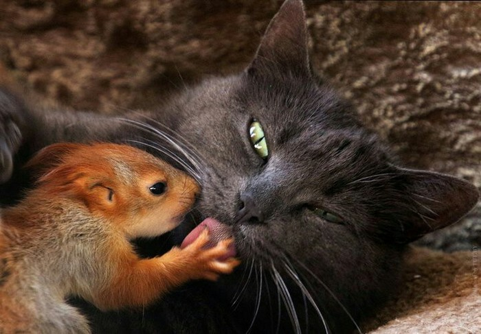 Милота... Животные, Кот, Котята, Белка, Длиннопост