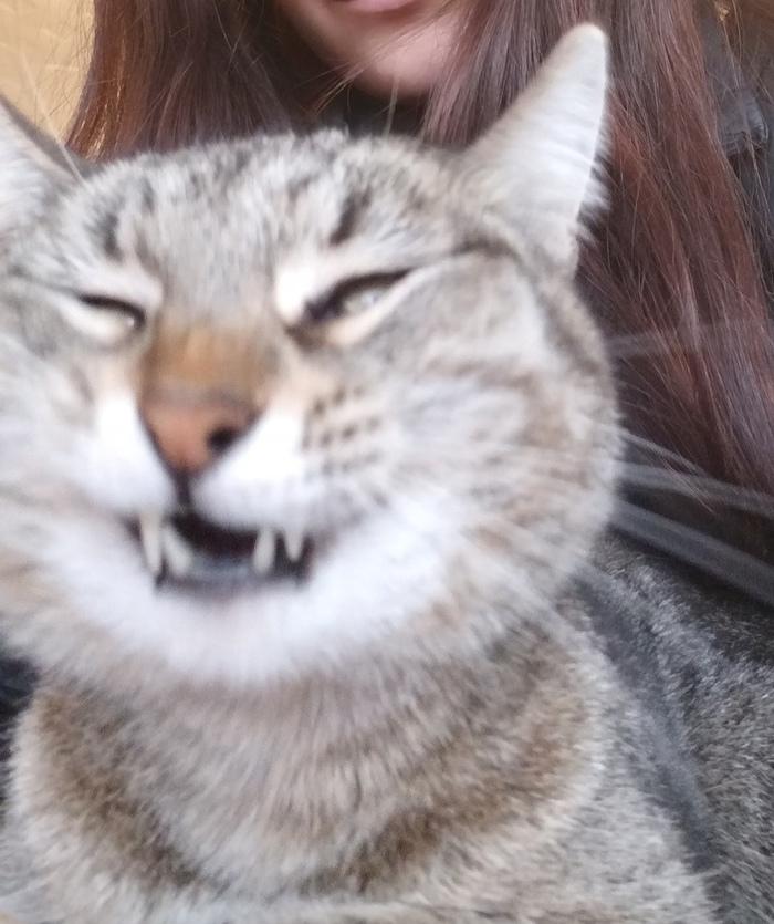 Эти странные коты Кот, Позитив, Юмор, Фотография, Длиннопост