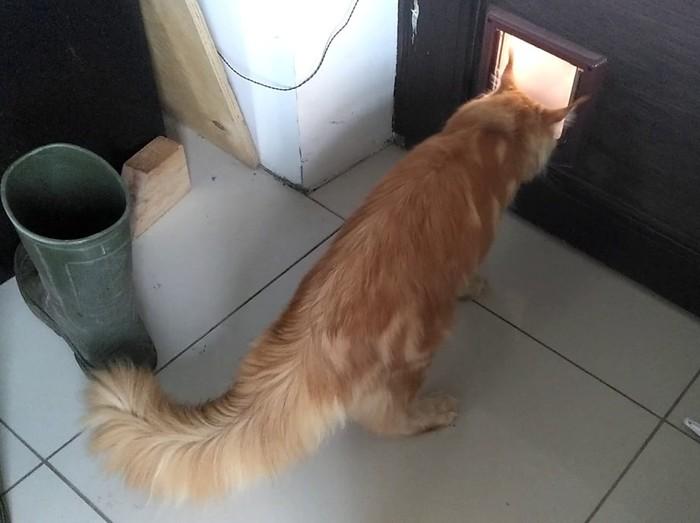 Кот застрял в двери! Кот, Деревня
