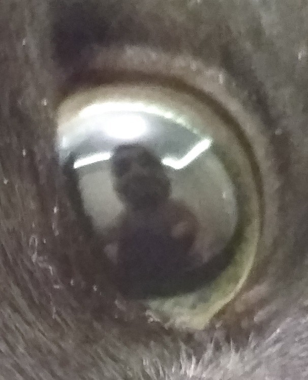 Я видел некоторое дерьмо... Кот, Испуг, Я видел некоторое дер*мо, Страх